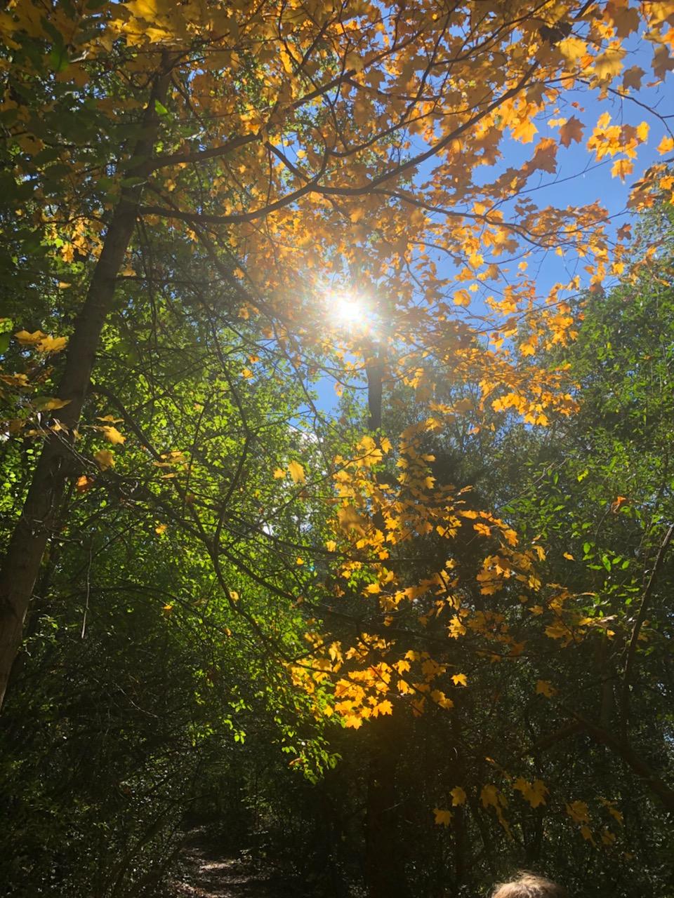 Light through the fall trees