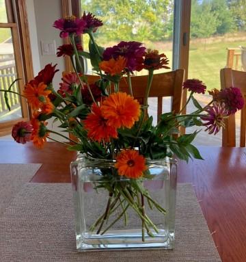 Zinnias in Dad's vase
